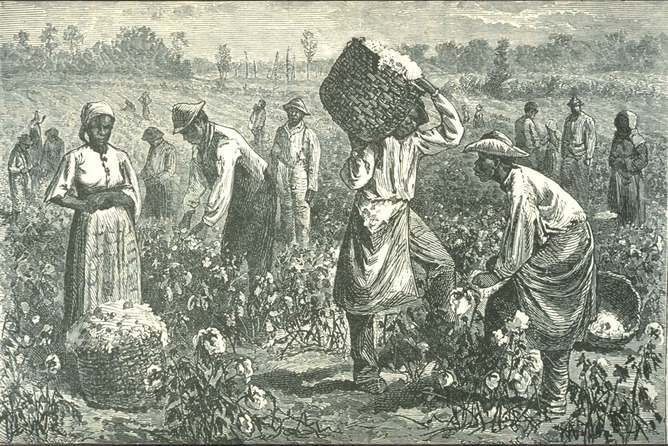 Cotton picking in the U.S. South in 1873-1874